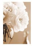 Roses in Sepia