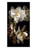 White Flowers Delight I