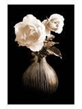 Lighted White Roses