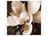 Magnolia Close Up I Reproduction d'art par Christine Zalewski