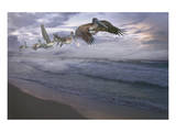 Pelican Plight