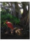 Spoonbill Plight Reproduction d'art par Steve Hunziker