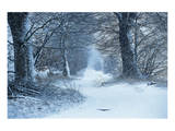 Winter Forest Path