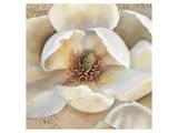 Magnolia Masterpiece II
