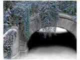 Trefoil Winter