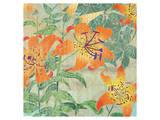 Tiger Lily Summer