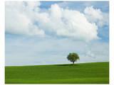 Tuscan Field Tree