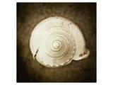 Cochlear I
