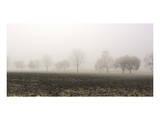 Tree Line in Fog