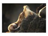 Snuggling Sea Lions Reproduction d'art par Steve Munch