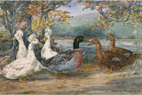 A Painting of Crested White Ducks and Rouen Ducks