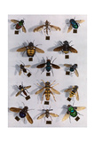Collection of Various Two-Winged Flies