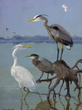 Great White and Blue Herons Perch on a Tree Trunk in Shallow Waters