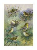 Painting of Several Species of Vireos Sitting on Tree Branches