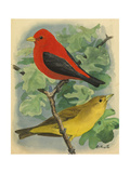 A Painting of a Male and Female Scarlet Tanager