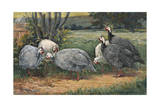 A Painting of White  Pearl and Lavender Guinea Fowls