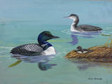 A Painting of Three Loons at Different Life Stages