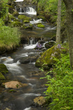 Moss-Covered Boulders  Wildflowers  and Trees  Border the Rushing Kleine Ohe Creek