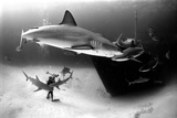 An Underwater Photographer Explores a Shipwreck as Caribbean Reef Sharks Circle Nearby
