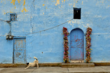 The Resident Dog Stretches in Front of a Small Church in Xoconusco  Mexico