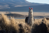 A Portrait of a Large Llama in Sajama National Park  Bolivia