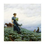 The Cabbage Field  1914