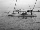 Oyster Dredging C1890-1910