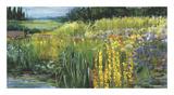 Meadow V