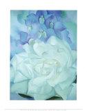 Rose blanche et dauphinelle Reproduction d'art par Georgia O'Keeffe