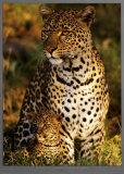 Leopard with Infant at Masai-Mara  Kenya