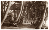 Allée bordée de cocotiers, Waikiki, Hawaï, 1916 Reproduction d'art