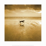 Dog on the Beach  West Wittering