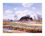 Tulip Fields at Sasenheim