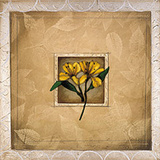 Framed Lily I
