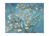 Almond Blossom, 1890 Reproduction d'art par Vincent Van Gogh