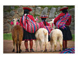 Peruvian Indios with Lamas Reproduction d'art