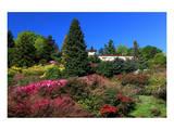 Azalea Bloom in the Botanical Garden San Grato  Carona  Switzerland