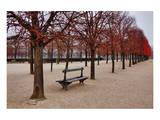 Tuileries Gardens in Winter  Paris  Ile de France  France