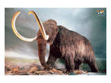 Woolly Mammoth Reproduction d'art