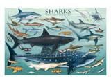 Requins Reproduction d'art