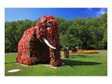 Flower Elephant in Maximilianpark  Hamm  North Rhine-Westphalia  Germany