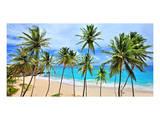 Beach at Bottom Bay  St Philip  Barbados  Caribbean