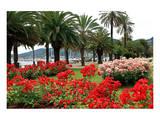 Palm-lined Promenade at the Gulf  City of La Spezia  Italian Riviera  Liguria  Italy