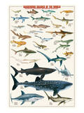 Dangerous Sharks Reproduction d'art