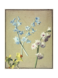 A Blue and a Lavender Hyacinth  and a Yellow Narcissus  C1805