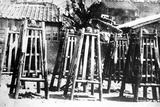 Exhibition of Executed Chinese Criminals  C1905-10