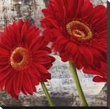 Red Gerberas I