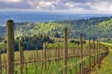View from Knights Gambit Vineyard  Dundee  Yamhill County  Oregon  USA