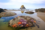 Starfish and Rock Formations Along Indian Beach  Oregon Coast