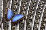 Blue Morpho on Wing Feathers of Argus Pheasant